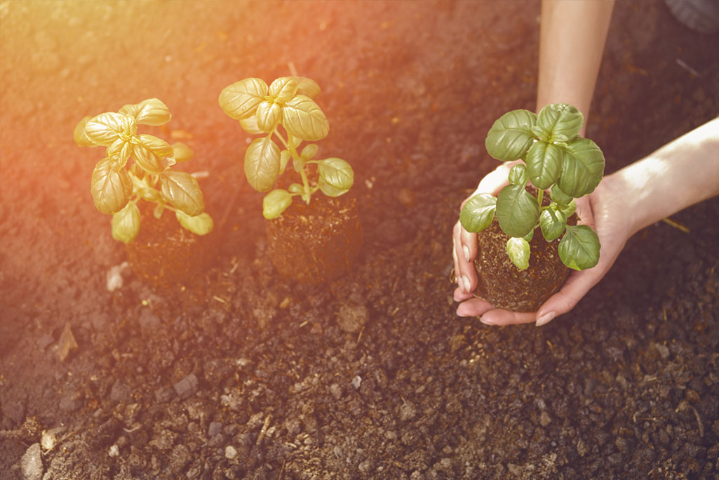 Best DIY Tips to Grow Your Herbs and Vegetables